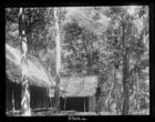 Chinese mining camp, Bukit Besar, 2,000 feet
