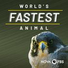 NOVA, Series 45, Episode 16, World's Fastest Animal