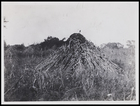Mound piled round with long rushes