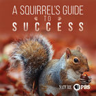Nature, Season 37, Episode 4, A Squirrel's Guide to Success