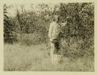 Photograph of Woman Picking Apples from Tree