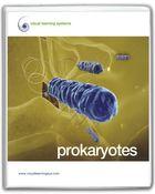 Fungi, Bacteria, and Protists, Prokaryotes