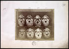 8 skulls viewed from base numbered 1-8 (not in order) on shelf