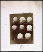 8 skulls viewed from back numbered 1-8 (not in order) three on two shelves and two on one and note pasted in to margin of book