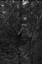 A child standing in a depression in the middle of forest vegetation.