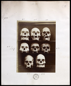 8 skulls viewed from front numbered 1-8 (not in order) two shelves of three and one of two