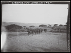 Group of men carrying long iron bars on their shoulders, approaching Kasai Co. post at Athenes