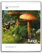 Fungi, Bacteria, and Protists, Fungi
