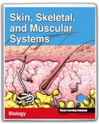 Amazing Human Body, Skin, Skeletal, and Muscular Systems