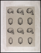 12 images of skulls from various views with roman numerals and captions at bottom of page