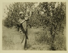 Photograph of Woman Picking Apples