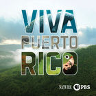 Nature, April 12, 2017, Viva Puerto Rico