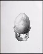 Back view of skull