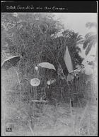 several umbrellas, dishes and flags mounted on sticks in tall grass of cemetary