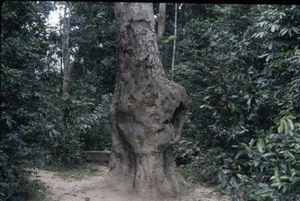 Close-up of a bole in a tree trunk in the forest at bai Bota.