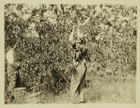 Photograph of Women Working on Farm in Maryland