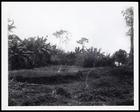 'Bantama ... a few mounds alone now mark its site', figure 50