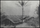 Group of thatched huts