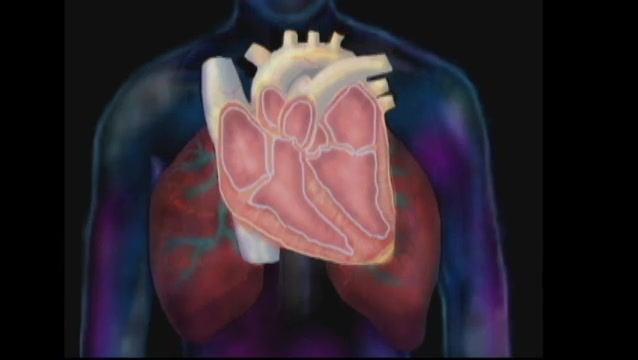 The Cardiovascular System Part 1 Anatomy And Subjective Data