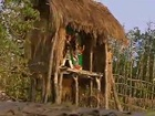 Tribal Animals II, Wild Cats