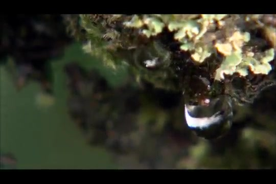 Water Life, Season 1, Episode 1, A World of Water