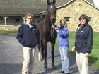 Equine Lameness Examination In Hand