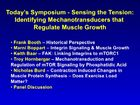 Sensing the Tension: Identifying Mechanotransducers That Regulate Muscle Growth