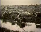 Sinrock Mary and How Reindeer Came to Alaska