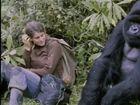 Biography, Dian Fossey