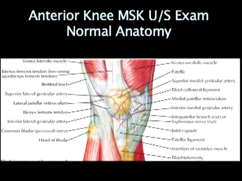 Msk ultrasound of the knee normal abnormal prevention msk ultrasound of the knee normal abnormal prevention ccuart Images