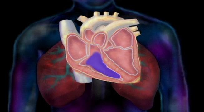 Anatomy And Physiology The Cardiovascular System The Cardiac Cycle