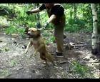 Panorama: Dogfighting Undercover