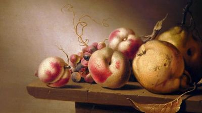 Apples, Pears and Paint: How to Make a Still Life Painting